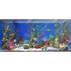 Acuario peces multicolor - Cuadros con peces ...