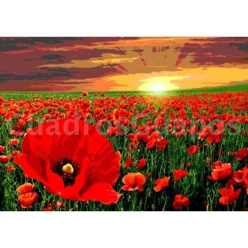 campo de flores  amapolas