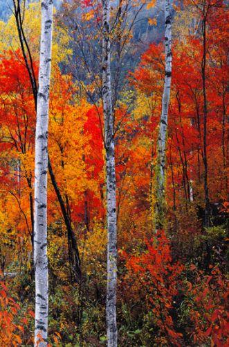 Paisaje de arboles el bosque rojo ii cuadro vertical - Cuadros verticales modernos ...